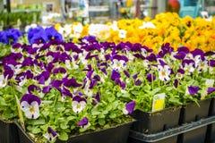 Magasin de maison et de jardin au printemps Photos stock