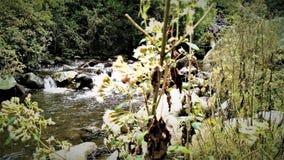 Magdalena River i Mexico - stad Arkivfoton