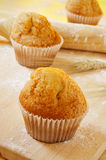 Magdalenas, typical spanish plain muffins Royalty Free Stock Image