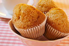 Magdalenas, typical spanish plain muffins. A plate with some magdalenas, typical spanish plain muffins, on a set table Stock Photography