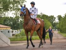 Magdeburg, Germany - 24 Juni 2017: Jockey rides on the red horse to the hippodrome