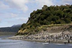 Magelhaenpinguïn, Magellanic Penguin, Spheniscus magellanicus stock photos