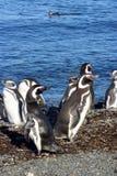 Magellan i Chile Royaltyfria Bilder