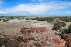 Magellan penguins colony at ocean shore. Magellan penguin in South America. Magellan penguins colony at Atlantic ocean shore Royalty Free Stock Photos