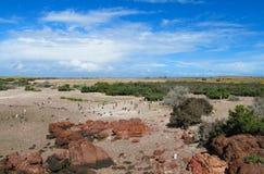 Magellan penguins colony. Magellan penguins on a sea shore on stones stock photo