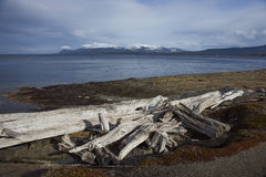 Magellan Strait in Patagonia, Chile Royalty Free Stock Image