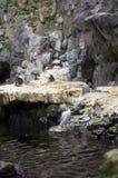 Magellanic企鹅室外栖所  免版税图库摄影