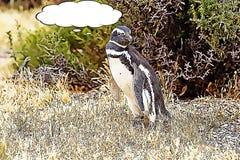 The Magellanic penguin Spheniscus magellanicus cartoon royalty free illustration
