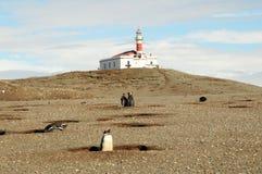 Magellanic penguins Stock Photography