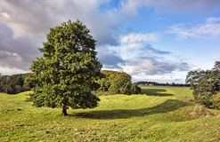 Magelund early medieval Mounds, Stock Photography