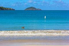 Magens Bay beach wave and pelican on a quiet morning. Royalty Free Stock Images