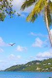 Magens Bay in the morning on St Thomas Island, US VI. stock photography