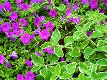 Magenta и зеленый - зацветать весны стоковое фото