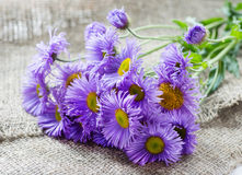 Magenta asters flowers over rustic background Stock Photo