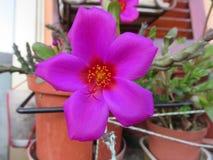 Magenta bloem stock afbeelding