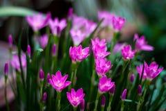 Magenta bloemen Stock Afbeeldingen