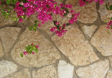 Magenta bloemen op steenmuur Stock Foto's