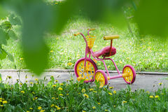 Magenta color kids tricycle with yellow plastic wheels and steel frame on paved path with dandelion flowers Royalty Free Stock Photo
