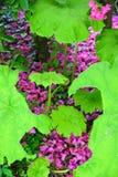 Magenta de la selva Foto de archivo libre de regalías