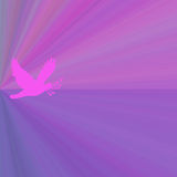 Magenta Dove Background Royalty Free Stock Photo