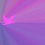 Magenta Dove Background Royalty Free Stock Photo