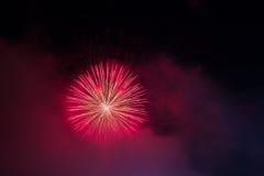Magenta fireworks Stock Image