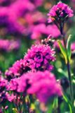 Magenta flower with dream effect. royalty free stock photography