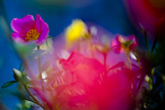 Magenta flower. (out of focus Royalty Free Stock Image