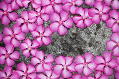Magenta flowers on floor Royalty Free Stock Images