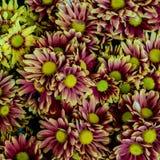 Magenta flowers floor Stock Image