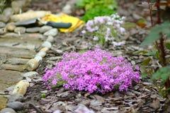 Magenta Flowers with Garden Tools. Magenta Flowers in Japan Garden with Garden Tools Behind Stock Photo