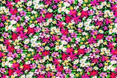 Magenta i Białych kwiatów Background/tekstura Obrazy Royalty Free
