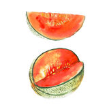 The magenta melon isolated on white background, watercolor illustration. Fruit set in hand drawn style Stock Illustration