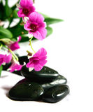 Magenta orchids with black therapy stones Royalty Free Stock Images