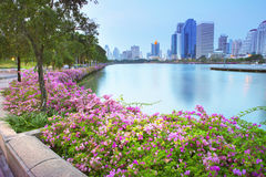 Magenta papers flowers and lake in public park  and  skyscraper Royalty Free Stock Photo