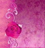Magenta rose grunge illustration Stock Image