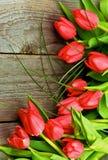 Magenta Spring Tulips Royalty Free Stock Photos