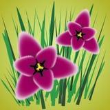Magenta Tulpen Bloemenornament met tulpen vector illustratie