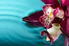 Magentafärgad orkidé för kort på vatten Arkivfoton