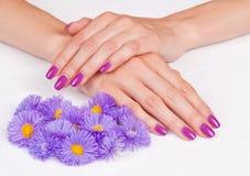 Magentafärgade fingernails och purpura blommor Royaltyfri Bild