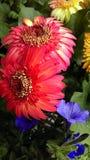 Magentarote Blume Stockbild