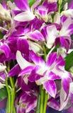 Magentarote Orchidee Lizenzfreies Stockbild