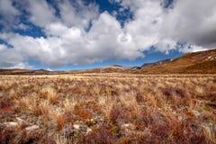 mager nationalparktongariro för liggande Royaltyfri Fotografi