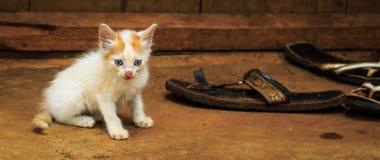 Magert fattigt kattungesammanträde på jordningen royaltyfria bilder