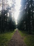 Magestic forest in Klaipeda royalty free stock image