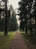 Magestic forest in Klaipeda royalty free stock photo