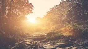 Magestic lata krajobraz w bajka lesie zdjęcie wideo