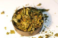 Maggior celandine, herba di Chelidonii Fotografia Stock