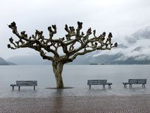 湖Maggiore视图在Ascona 库存图片