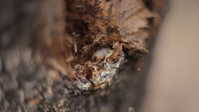 Maggot gnaws the bark of a tree stock video
